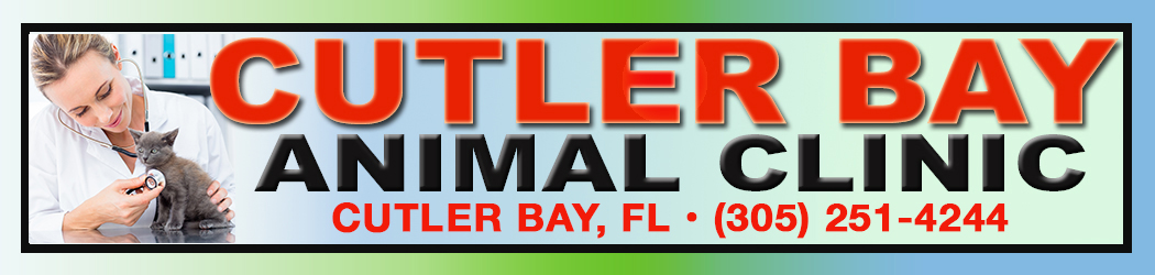 Friendly And Attentive Care For Your Pet! – Cutler Bay Animal Clinic – Cutler Bay, FL